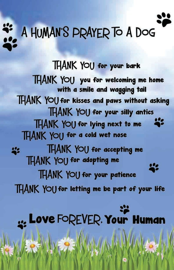 A Dog S Prayer