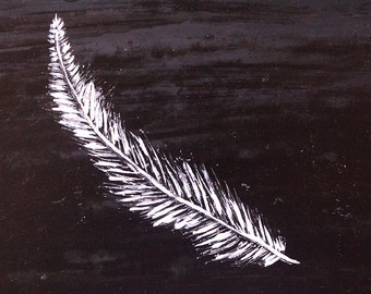 Feather Painting On Scratchboard.
