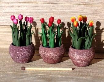 Tulips in pots - miniature