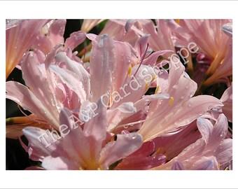 Item #74 // Surprise Lilies