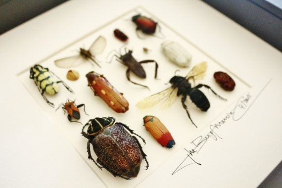 Artframe with real insects : Topquality display with mixed insects , FREE SHIPPING