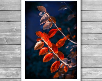 Autumn Garden, Autumn Photography, Fall Red Leaves, Autumn Nature, Autumn Art Photo, Fall time nature, Autumn prints, Home photo print, red
