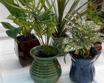 "Miniature Garden Plants -3 Plants in 3"" ceramic pots (FREE SHIPPING)"
