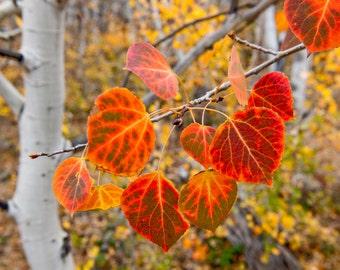 Nature Photograph - Vibrant