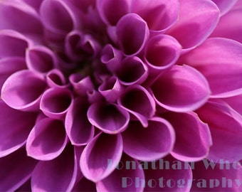 Blossoming Purple Flower- Fine Art Photography - Digital photography download, instant download, flower photography