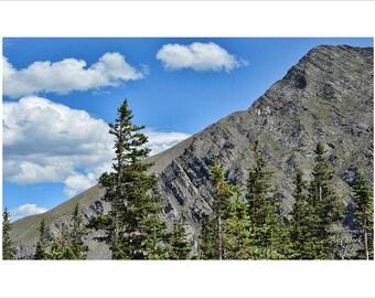 Colorado Timberline