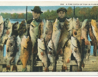 A fine catch of fish in Florida, Two men with fish on dock, catch of the day, unposted