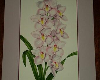 Cymbidium Orchid original watercolor painting
