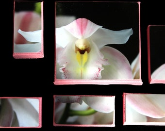Of Orchids