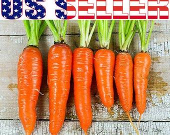 200+ ORGANIC Kuroda Long Carrot Seeds Heirloom NON-GMO Sweet Delicious Juicy!!!