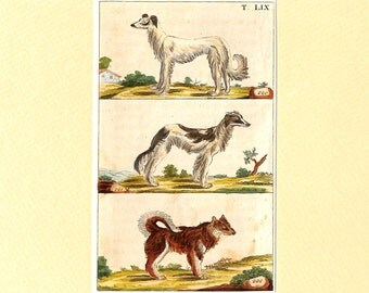 Dog Print, Dogs, Wolfhound, Antique, Matted Print, 1808