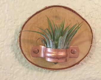 Birch Tag Air Plant Holder