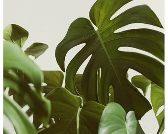 Nature Photograph - Leaf Photography - Botanical Photograph - Verdure #5 - Fine Art Photograph - Alicia Bock - Green - Floral Art - Leaves