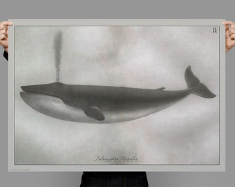Whale Art, Vintage Style Nautical Natural History Design, Original Painting from antique etching, Digital Art Download Print or Poster