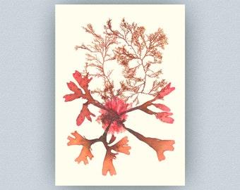 Pressed seaweed, Seaweed art, Original seaweed pressing, Victorian Art, Marine Botanical print, beach cottage decor, seaside living, coastal