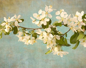 Apple Blossom Print, White Flower Wall Art, Cottage Chic Decor, Asian Decor,  Flower Photography, Nature Photography