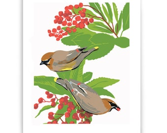 "ART94: Cedar Waxwings and Toyon 8"" x 10"" Art Reproduction"