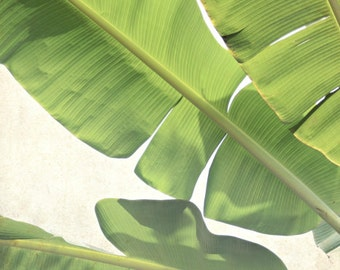 "Botanical photography print tropical banana leaves green foliage wall art ""Green Banana"""