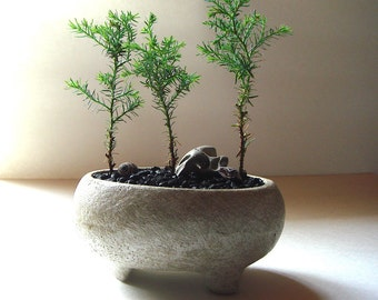 Bonsai Footed Handmade Concrete Bowl Pot Planter