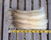 "Pet Lock! 1oz Rare Long Staple 9.5"" Dorset 7 Crimpy Raw Wool Fleece Sample"