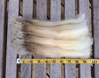 "Pet Lock! 1oz Rare Long Staple 9.5"" Dorset 7 Crimpy Raw Wool Fleece Sample"