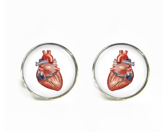 Anatomy Heart small post stud earrings Stainless steel hypoallergenic 12mm Anatomical Gifts for her