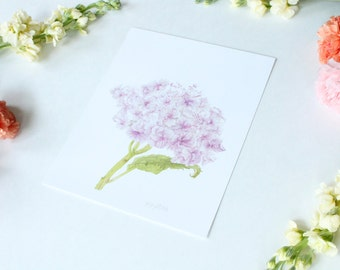 Hydrangea - 8x10 print