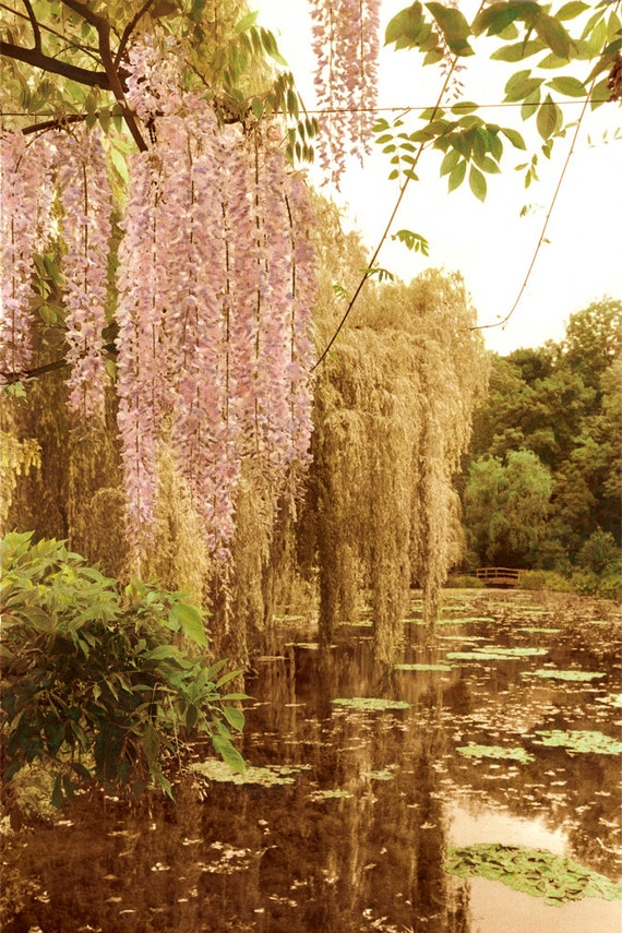 Giverney Wisteria  Archival Print