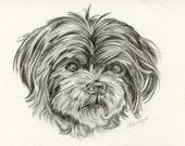 Custom Pencil Drawing, size 4 x 6, Custom Pet Portrait, Custom Pet Drawing, Dog Art, Dog Portrait, Dog Pencil Drawing, Graphite, Pet Art