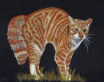 Colored Pencil  Angry Tiger Cat Drawing