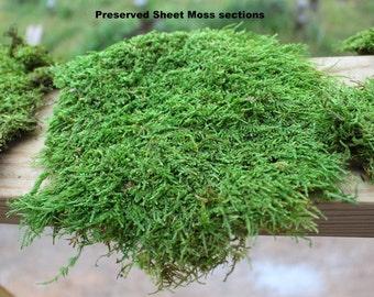 Carpet Moss-PRESERVED Moss-Sheet moss-Quart bag-Wedding Moss-No water needed