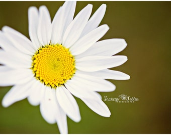 Spring Wild Daisy Flower Fine Art Canvas wrap- Macro 2