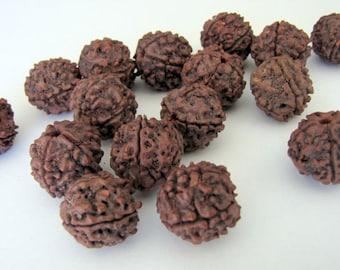Set of 6-Rudraksha Beads