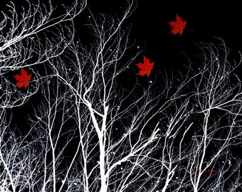 Red Maple Leaf Art, Wind Blowing Leaves, White Bare Trees, Nature Natural, Wilderness Forest, Woods Woodland, Black Giclee Print, 8 x 10