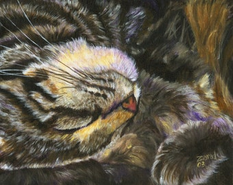 Power Nap Series Brown Tabby