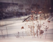 Nature Photography, Winter Photograph, Rustic Photograph, Cottage Style, Farmhouse Decor, Natural Wall Art, Landscape Photography, Snow