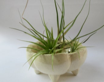 Tiny Cream White Planter Sea Pod Tiny Ceramic Sea Urchin Air Plant Holder Succulent Planter