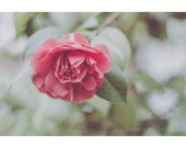 Rose Tree, 8x12 Print, Dreamy Flower Photography, Botanical Print, Pink Rose, Nature Photography, Pastel Decor, Shabby Chic Photography
