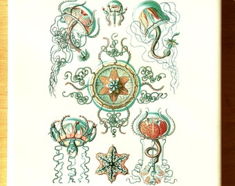 Green Brown Jellyfish Illustrations- Glass Fusing Decal, Ceramic Decal, Enamel Decal