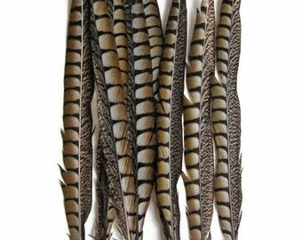 "Tail Feathers, 10 Pieces - 30-35"" NATURAL LONG Lady Amherst Pheasant Tail Feathers : 3929"