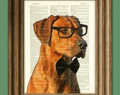 The Rhodesian Ridgeback is quite serious dog in tie and glasses beautifully upcycled vintage dictionary page book art print