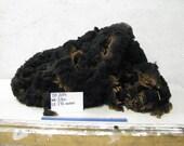 2015 Black Half Dorset Y20