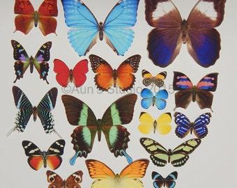 Realistic Premium Paper Butterflies - Cut outs - Large Set of 18