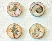 Shell Magnets, Ocean Magnets, Kitchen Magnets,Nature Magnets, Magnet Set of 4, Buy 3 Get 1 Free 395-M