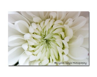 Chrysanthemum Blossom Print, Spring Floral Fine Art Photography, Ivory Flower Petals Picture, Kitchen Wall Accent, Feminine Bedroom Decor