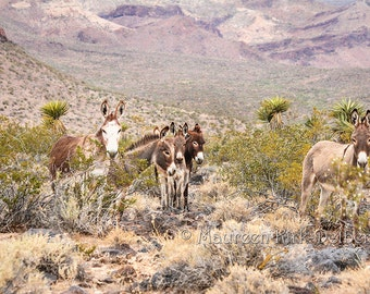 Wild burro, modern farmhouse, Route 66,  donkey babies, mothers, southwestern decor, old west decor, wild and free, donkey, livingroom decor
