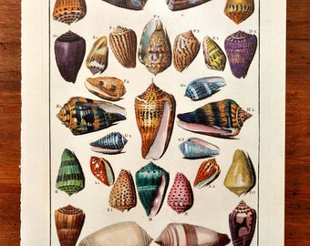 Shell Illustration Book Plate XV Print Beach House Cottage Decor Cones