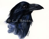 Raven II -  Original Watercolor Painting, painted by J.L. Raven - 8x6inches