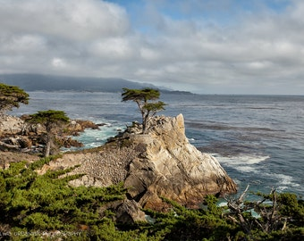 California Coast Lone Cypress  Landscape Photography Cliffs Ocean scenic drive travel yellow home decor  Fine Art Photography Print