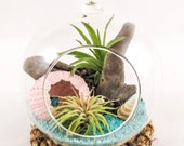 Air Plant Terrarium Kit by Midnight Blossom - Hanging Globe with Living Tillandsia Plants in a Colorful, Beach Setting. A Wonderful Gift